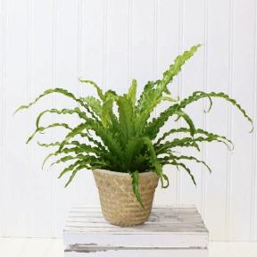 Top tips as ferns make garden comeback