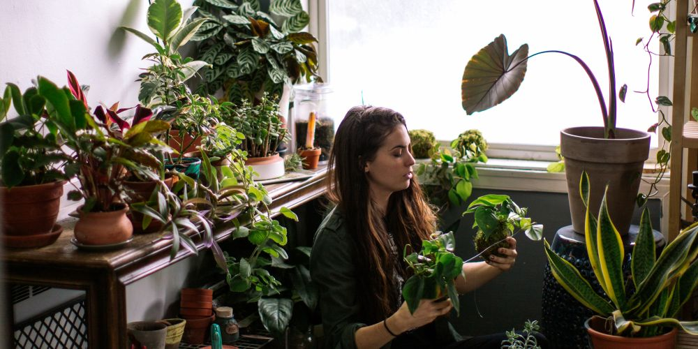 Here's how to style your indoor plants