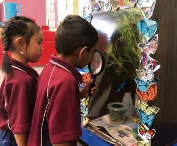 South Coogee Primary School students checking out their Butterfly Garden Project habitats.