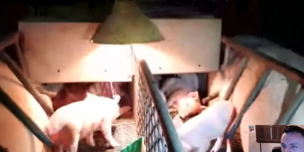 Vegan activist James Warden live streamed video from inside a south west piggery on Sunday night.