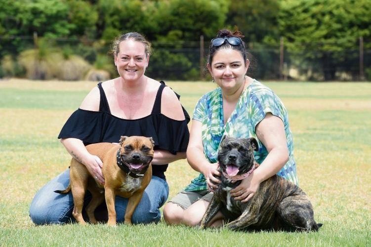 Rockingham Pet Adoption Day