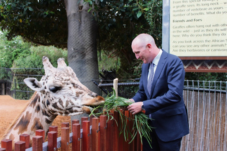 Environment Minister Stephen Dawson and Armani the giraffe try the new viewing tower. Picture: Nadia Budihardjo