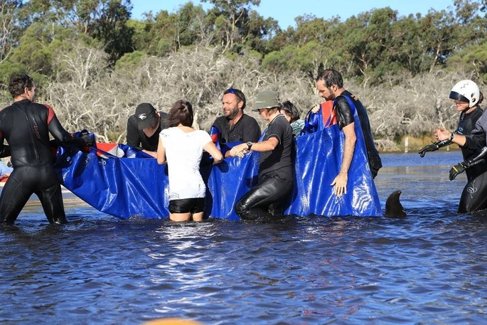 Campaign for cameras in estuary to prevent dolphin strandings