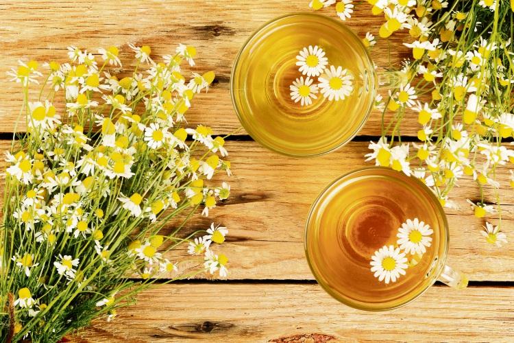 Chamomile herb and tea.
