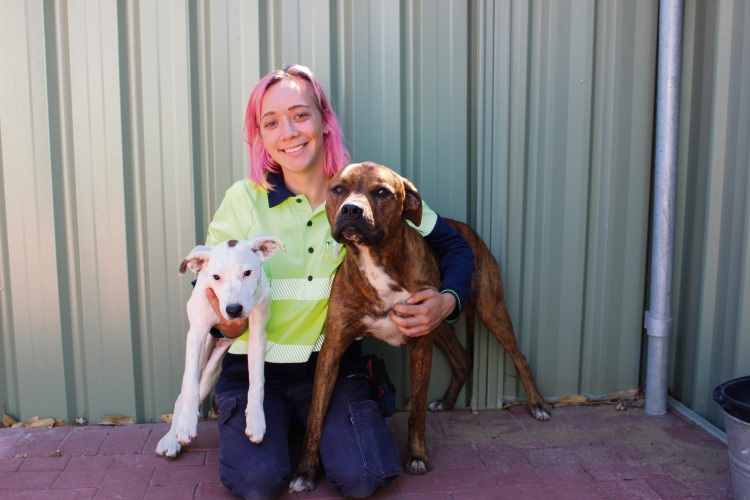Animal care officer Chelsey with dogs in the Wanneroo Animal Care Centre.