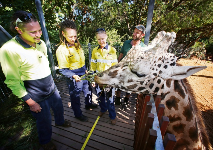 d492129d City of Melville environmental restorer Jamie Davies and natural areas maintainers Jane Spinks and Sandra Wells with Perth Zoo horticulturalist Jeff Robertson and giraffe Armani. Picture: David Baylis