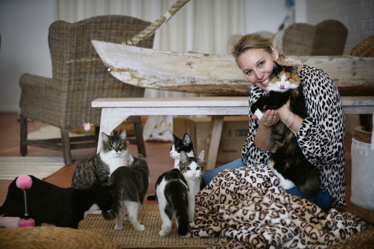 A purrrfect cat cafe is opening in Fremantle