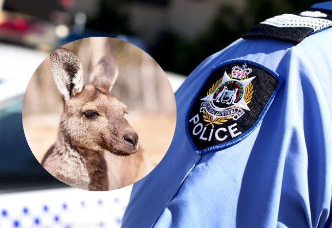Charges laid after video emerged of alleged kangaroo bashing