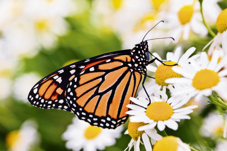 Gardens perfect for birds, bees and butterflies