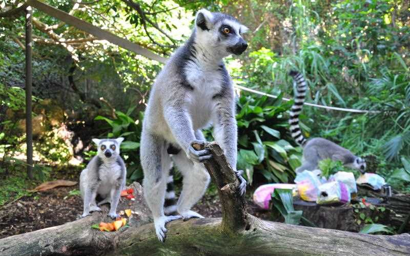 Easter treats for Perth Zoo's cutest