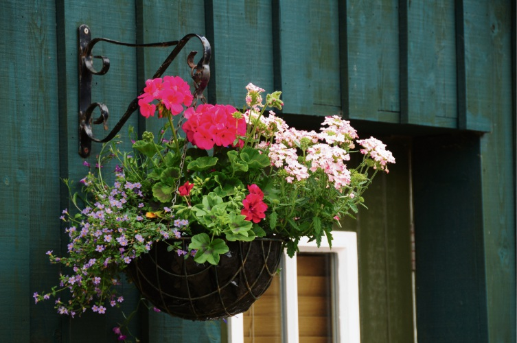 Finding the ideal hanging basket plants