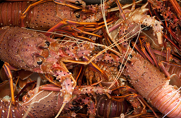 A deal to boost local lobster supply in Western Australia has collapsed.