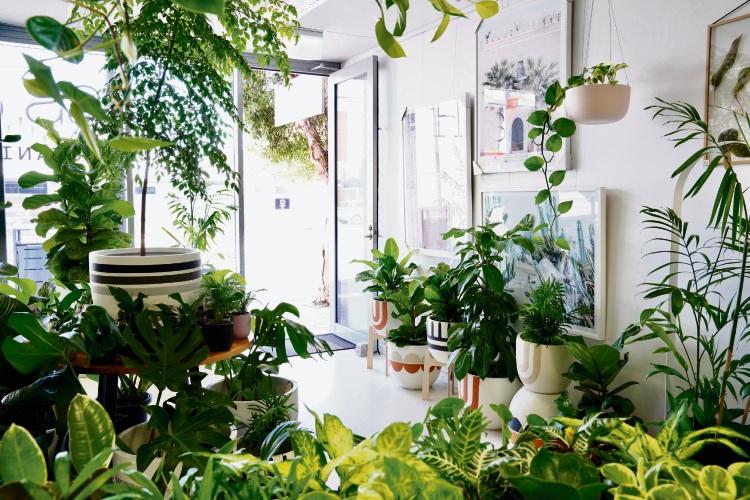 Hass & Co Botanics Perth.
