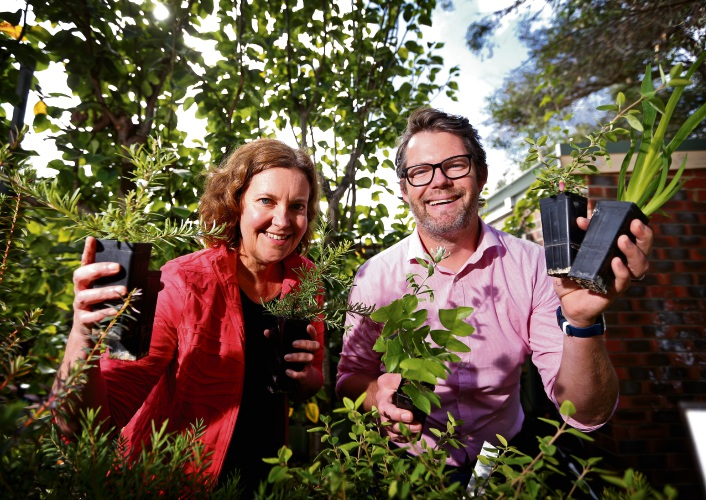 Rachael Roberts (Coordinator, Environment House) and Mayor Dan Bull (City of Bayswater) with some seedlings. Picture: David Baylis www.communitypix.com.au d493321 .