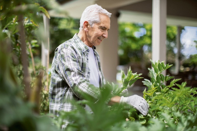 Community gardens are among the growing range of services offered in retirement villages.