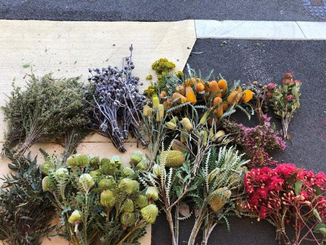 Some of the flowers recovered after being stolen from Kings Park. Picture: Kings Park and Botanic Garden