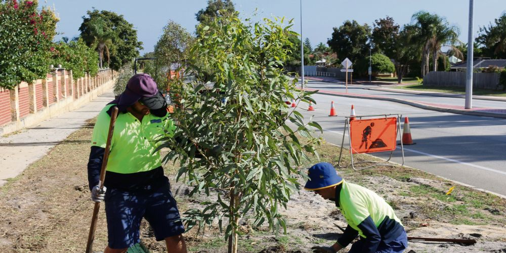 Newly planted trees lining Garden Street in Southern River.