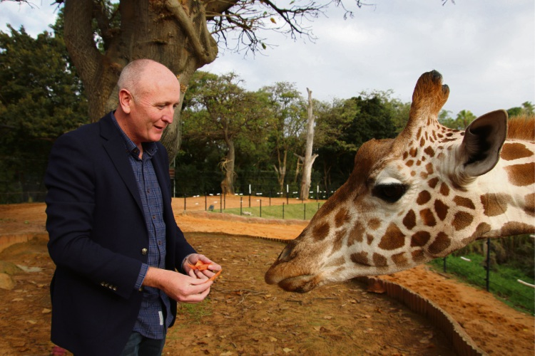 Environment Minister Stephen Dawson with Kitoto at Perth Zoo. Picture: Perth Zoo