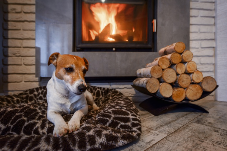Protecting pets in winter from heater and fireplace burns