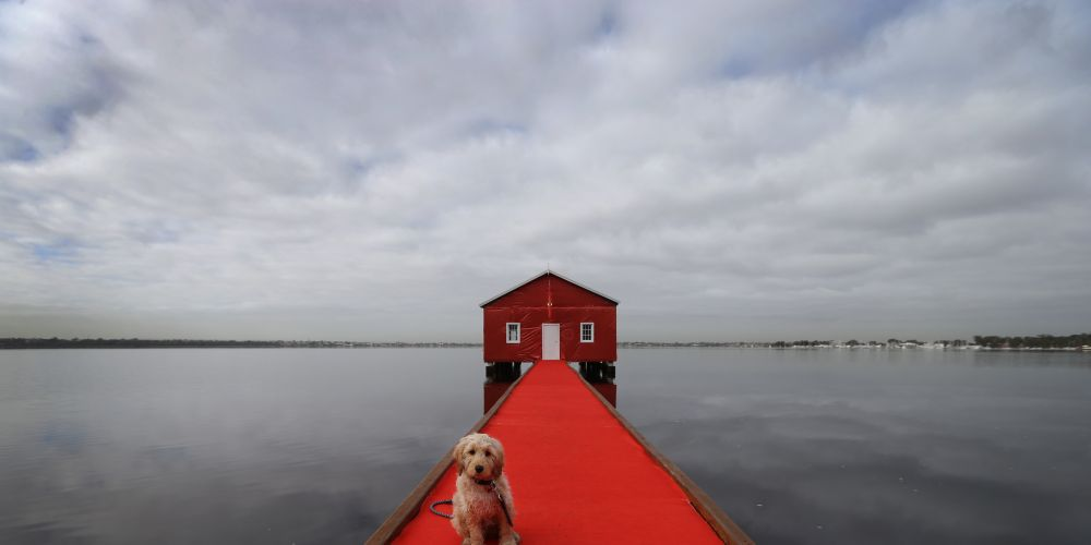 Charlie the dog from Greenwood approves of the blue boathouse's new look