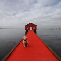 Charlie the dog, from Greenwood, approves of the blue boathouse's new look. Photo: Andrew Ritchie