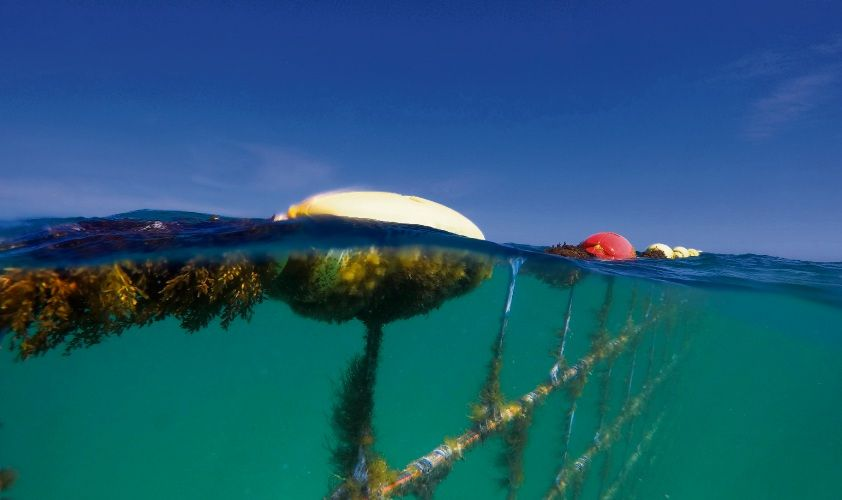 Quinns Beach shark barrier. Picture: Global Marine Enclosures