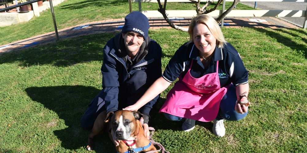 RSPCA animal attendant David Woodacre and events coordinator Nicky White with Nixon. Picture: Kristie Lim