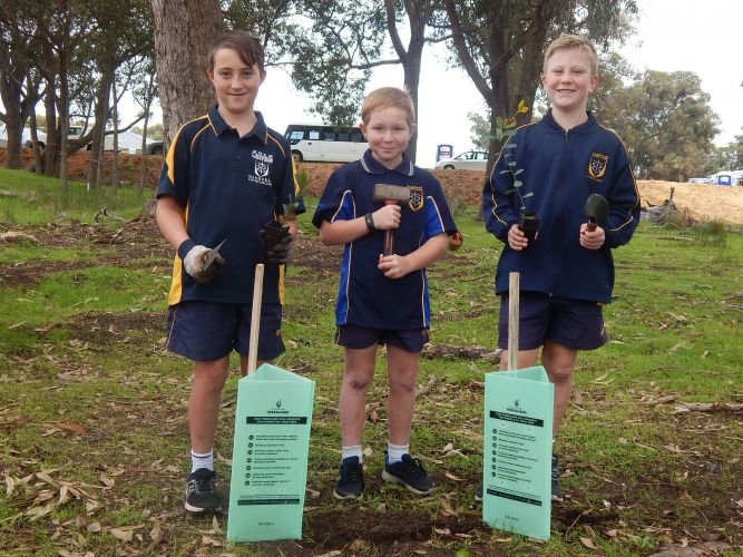 Ethan (11), Mac (8) and James (11) got their hands dirty planting seedlings in Lakelands.