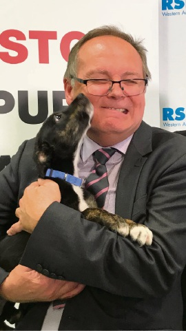 Cut the red tape: call to streamline dog and cat registration