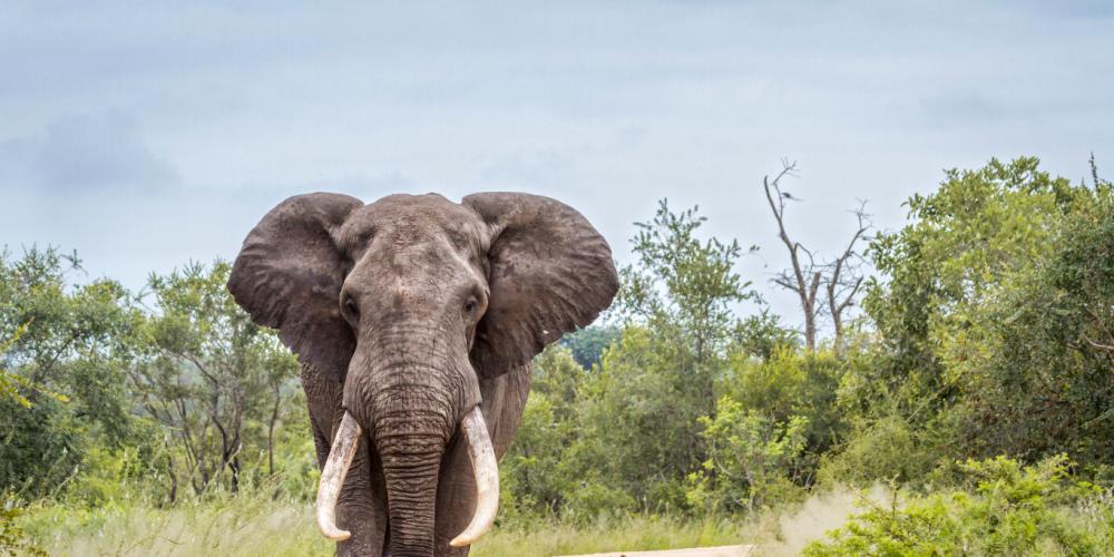 Australia will pursue domestic ivory ban