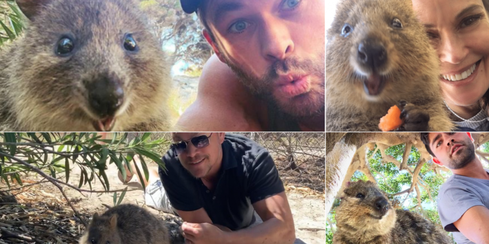 Famous selfies with the quokkas on Rottnest Island.