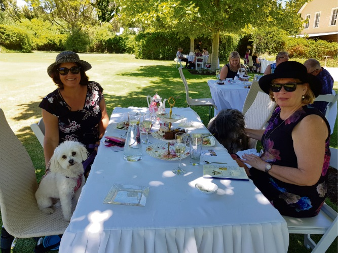 Pampered pooches enjoy high tea in elegant surrounds