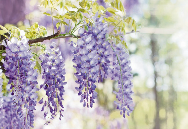 Six spring-summer species to plant