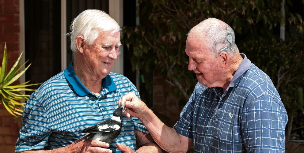 Watermans Bay residents Ken Schultz and Arthur Green with one of the rescued magpies. Pictures: David Baylis www.communitypix.com.au d496456
