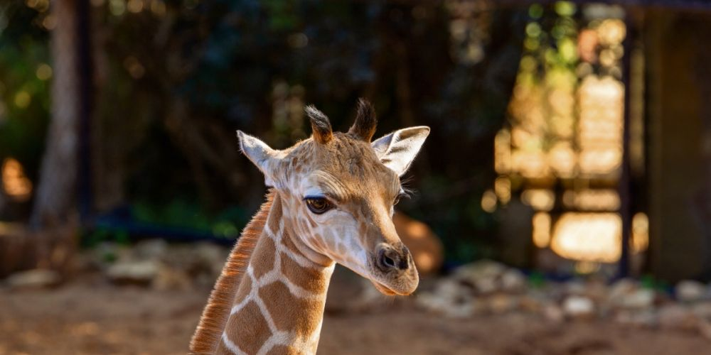Picture: Perth Zoo