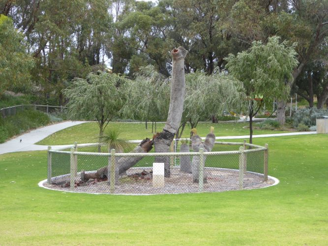 The dead grass tree at Campground Adventure Park. Picture: Homer Ford