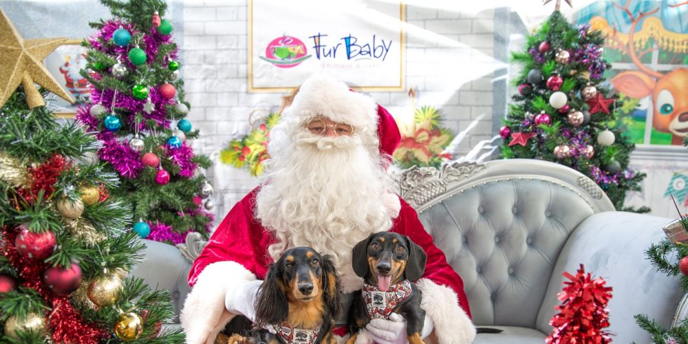 2018 Santa Paws photo shoot at FurBaby Boutique and Cafe. Photo: Richelle Beswick Photography