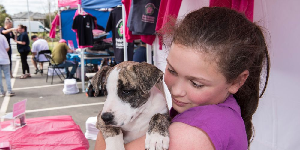 Catalina's Adopt-a-Dog day is similar to events held in the eastern states. Pictures supplied