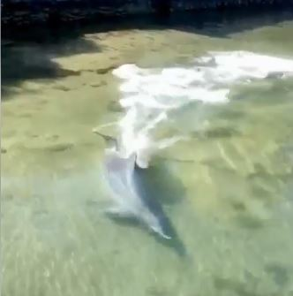 WATCH: dolphin feeding in Mandurah