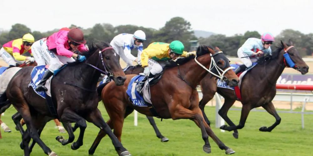 Racing and Wagering WA purchase North Dandalup site Touchstone Farmhouse to rehome retired racehorses under WA Racehorse Welfare Plan. Credit: Laurie Benson/Albany Advertiser