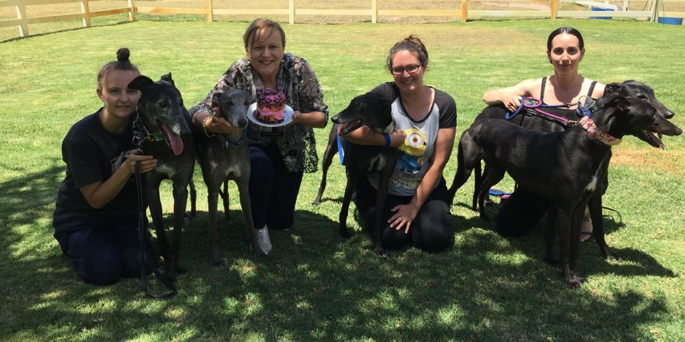 Greyhound owners are planning parties when the laws requiring their pets to be muzzled in public are changed.