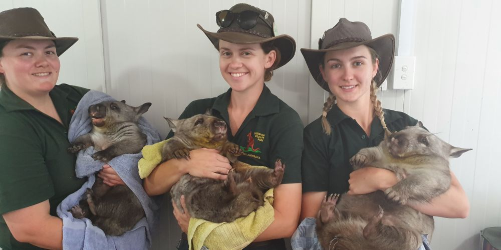 Caversham Wildlife Park keepers with the new wombat babies. Picture: Caversham Wildlife Park.