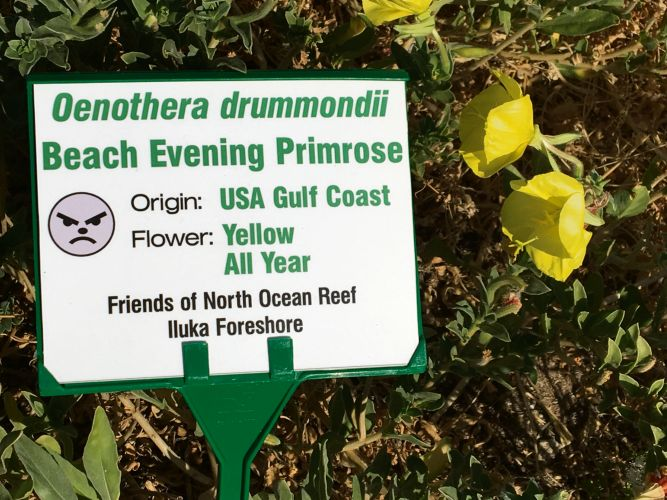 These labels will no longer be installed along the coastal path between Burns Beach and Iluka because of their continual theft.