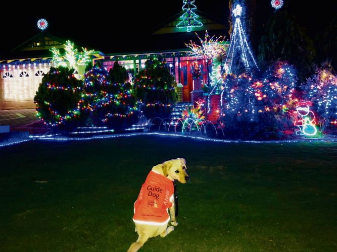 Ambassador dog Annie at the Prairie Dunes Place Christmas lights display.