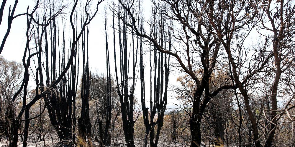 Dianella fire damage. Photo: David Baylis