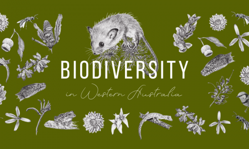 Art vs EnviroScience: Biodiversity in WA