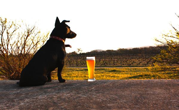 Black Dag's late brewery dog, Macca
