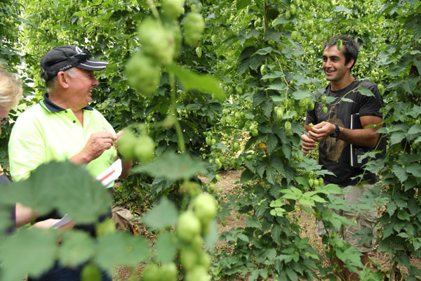 Ben Kraus of Bridge Road at Rostrevor hop farm