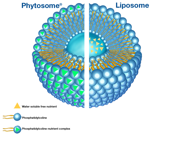 Liposomes and Phytosomes