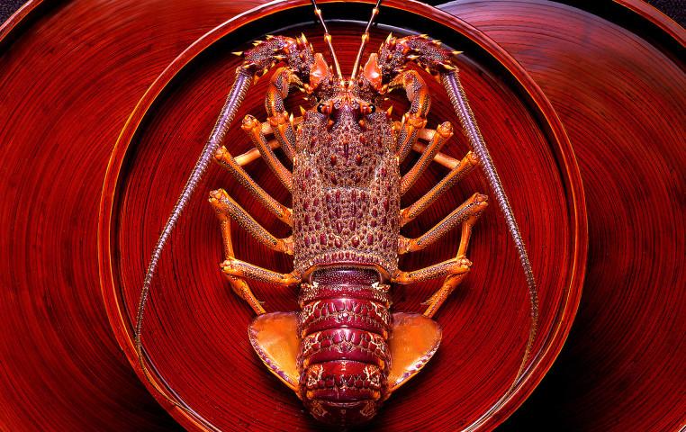 Crayfish.jpg